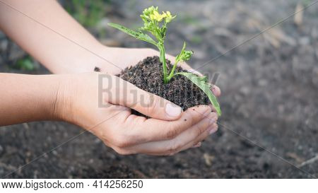 Woman Hand Hold Planting Growing A Tree In Soil On The Garden. Female Plant Small Young Tree By Hand