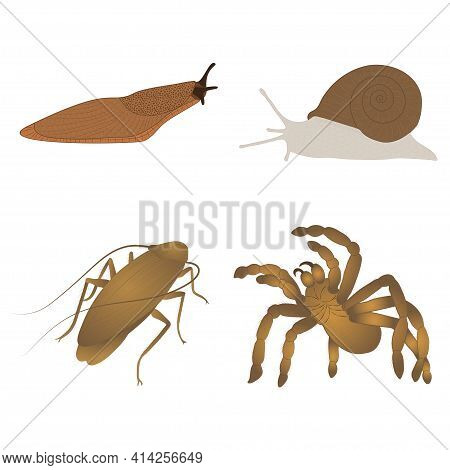 Set With Insects Isolated On White Background. Cockroach, Tarantula, Slug And Grape Snail.  Element
