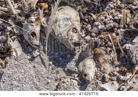 dead fish bones