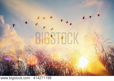 Birds Flying And Grass Flower On Sunset Sky And Cloud Abstract Background. Freedom And Nature Concep