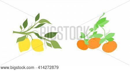 Color Set Of Fruit Citrus Branches. Hand Drawn Citrus Fruits Hanging On A Branch With Leaves. Decora