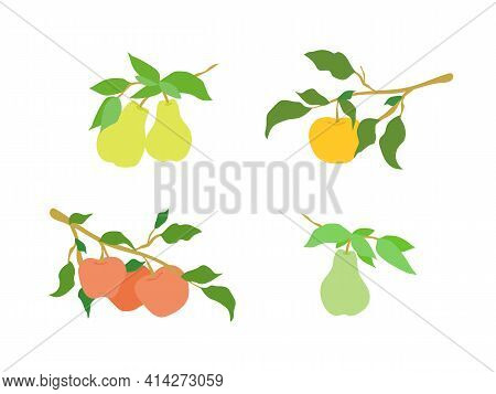 Vector Color Simple Set Of Fruit Branches. Decoration For Kitchen Design, Food Packaging, Vector Fla