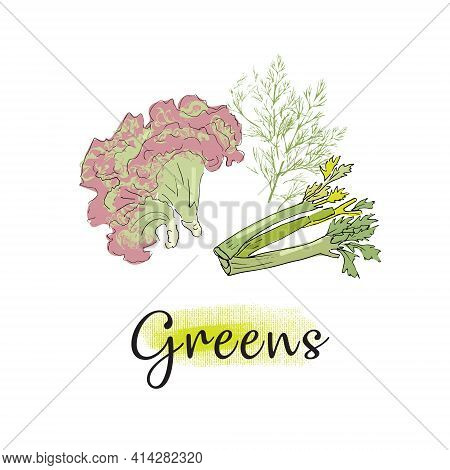 Vector Image Of Culinary Greens - Lettuce, Dill, Celery. Isolated On A White Background.