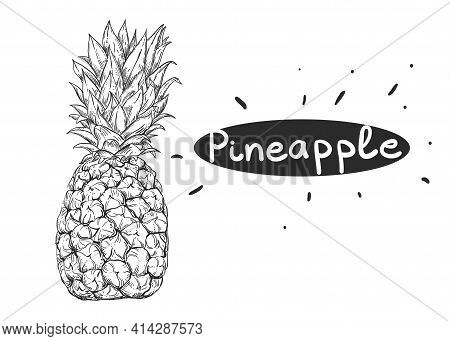 Hand Drawn Sketch Black And White Of Pineapple. Vector Illustration. Elements In Graphic Style Label