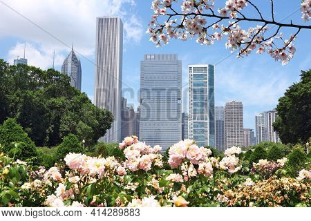 Spring In Chicago, Illinois. Skyline Of Chicago With Cherry Blossoms.