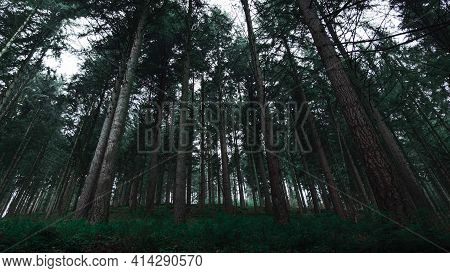 Dark Mystic Forest In Autumn. Wilderness, Magical Scene