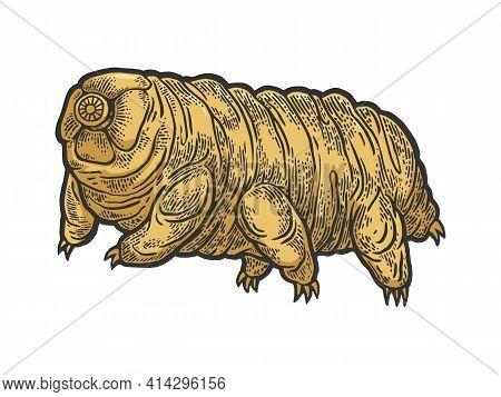 Tardigrade Water Bear Moss Piglet Micro Animal Color Sketch Engraving Vector Illustration. Tee Shirt