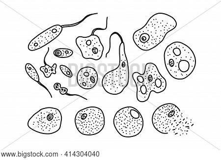 Phases In Life, Bacteria Set, Vector Illustration. Biology Science Concept, Microbiology With Virus
