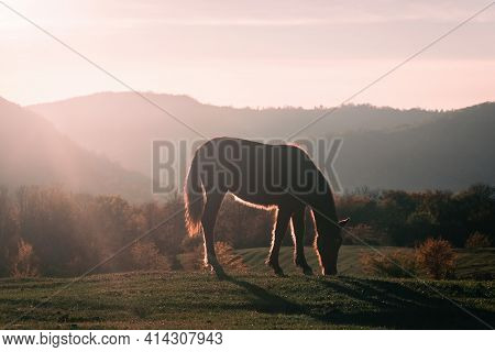 Horse On Pasture Eating Grass, Sunset Light. Beautiful Nature, Rural Outdoor View. Brown Horse And M