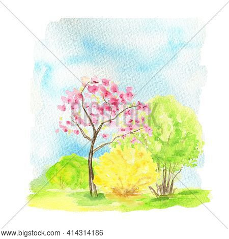 Watercolor Spring Landscape, Sakura Pink Flowers Trees And Yellow Forsythia Bush On Blue Sky, Green