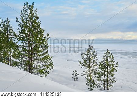 Winter Landscape With Green Spruce And Pine Trees In A White Snowdrift Amid A Blue Cloudy Skies And