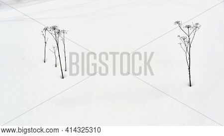 Two Isolated Groups Of Abstract Shape Of Black Dry Grass Against The Background Of White Snow