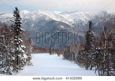 Winter Forest Hills