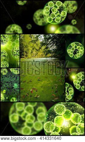 Green Single Cell Chlorella Algae Microscopic Conceptual 3d Illustration Collage