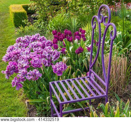 A colorful spring tulip garden with garden chair