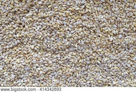Pearl Barley Background. Top View. Food Background. White Pearled Barley Grains