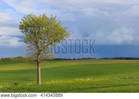 Beautiful spring landscape and lonely tree on a green field
