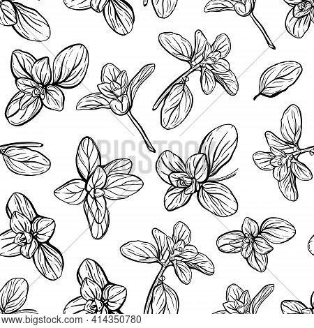 Basil Seamless Pattern. Italian Herbs.a Sprig Of Marjoram. Basil Is A Fragrant And Fragrant Seasonin