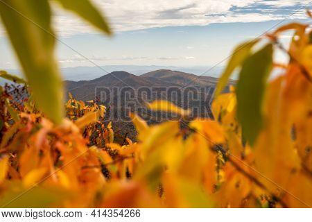 Mountain Ridges Throgh Bright Yellow Leaves Along The Blue Ridge Parkway