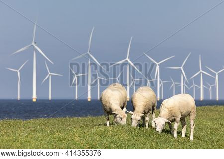 Dutch Dike Along Ijsselmeer With Wind Turbines And Three Grazing Sheep