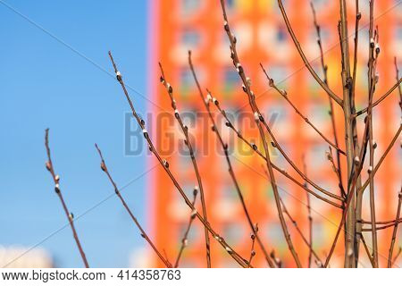 Budding Buds On A Tree. Spring In The City. The First Buds On The Background Of A Large Blurred Hous