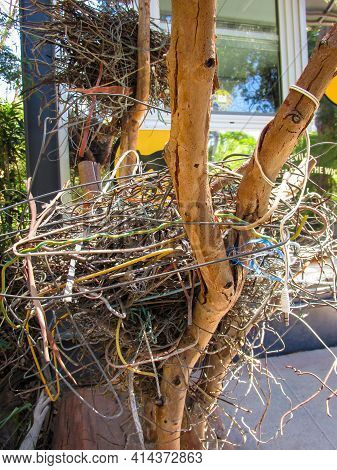 Healesville, Australia - 30 December 2016: Magpie's Nest Made Of Stolen Coat Hangers On A Tree Branc