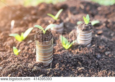 Money Growth. Small Tree On Stack Coin And Soil. Planing Earn Money Investment And Saving Money Futu