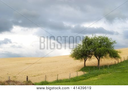 Tree on the border