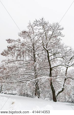 Snow-covered Trees In A Hilly Park In Hazy Weather.
