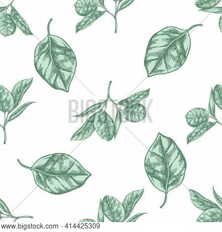 Seamless Pattern With Hand Drawn Pastel Ficus Stock Illustration