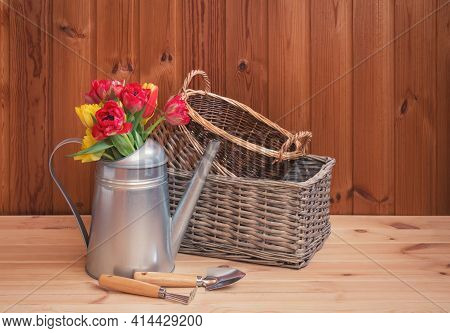 Bouquet Of Colorful Tulips In Watering Can, Empty Wicker Baskets And Garden Tools On Wooden Table. S
