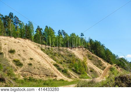 Pine Forest That Grown Over The Former Site Of Industrial Quarry. The Only Trace Of Human Is Unusual