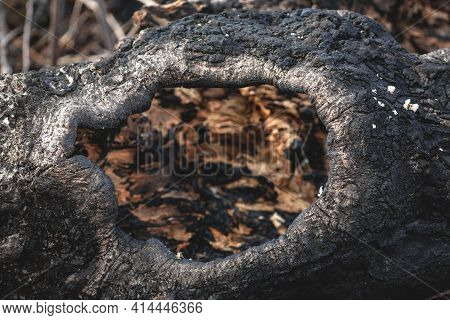 Burnt Tree With A Hollow. Abstract Hollow In An Old Tree