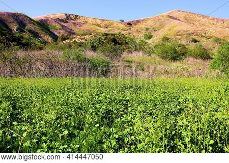 Lush Grasslands With Mustard Flower Blossoms During Spring On Lush Badlands With Barren Hills Beyond