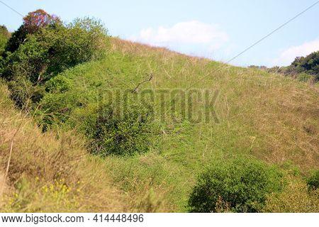Lush Green Grasslands And Native Walnut Trees On A Rural Hillside At Windswept Badlands Taken In Chi