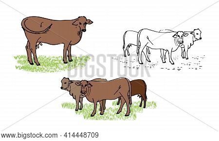 Herd Of Cows, Cow, Set Of Vector Illustrations Of Farm Animals, Isolated On A White Background.