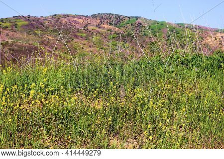 Lush Grasslands And Wildflowers During Spring With Barren Hills Beyond Taken On A Windswept Plateau
