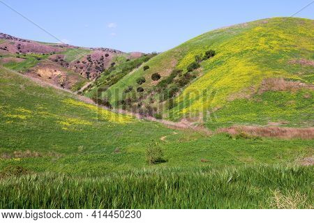 Lush Grasslands On A Rural Plateau Including Hills Covered With Mustard Wildflowers During Spring Ta