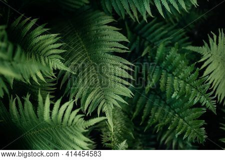 Green Fern Leaves Petals Background. Vibrant Green Foliage. Tropical Leaf. Exotic Forest Plant. Bota