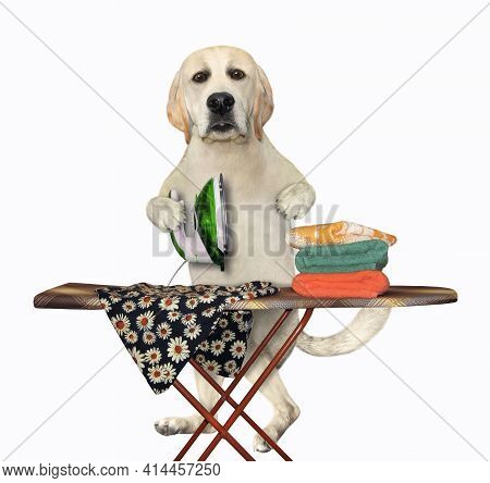 A Dog Labrador Irons Clothes Using An Iron On An Ironing Board After Laundry At Home. White Backgrou