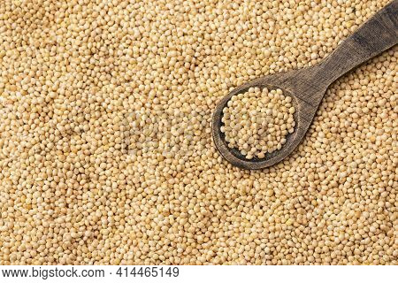 Organic White Millet Seeds - Healthy Food