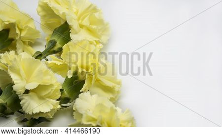Yellow Carnations On White Background. Carnation Flowers For Mothers Day.