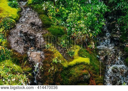 Scenic Landscape With Clear Spring Water Stream Among Thick Moss And Lush Vegetation. Mountain Creek