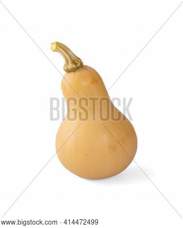Butternut Squash An Isolated On White Background