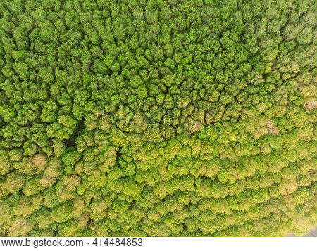 Green Tropical Green Tree Rain Forest Aerial View