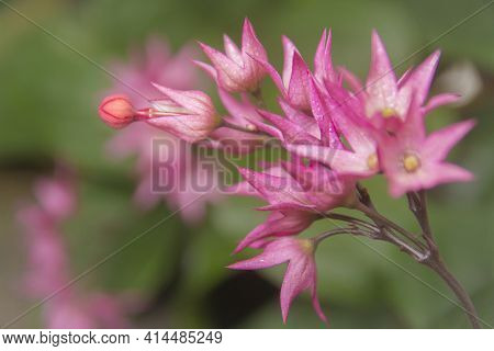 Macro Shot Bright Pink Flower Close-up Picture