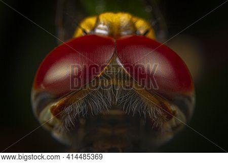 Macro Shots Dragonfly Back Top Head Close-up
