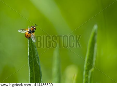 Close-up Of A Fly Sitting On Green Grass. Fly Sits On A Leaf Of Grass, Colorful Insect, Macro Photog