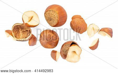 Flying Hazelnuts  Isolated On White Background. Hazelnut Colection Macro. Top View. Flat Lay