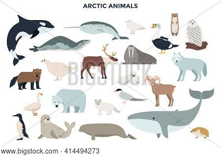 Bundle Of Funny Wild Polar Animals, Marine Mammals And Birds. Collection Of Fauna Of Arctic. Set Of